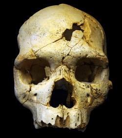 스페인 아타푸에르카에서 발견된 43만 년 전 호모 속 인류의 두개골. 연구 결과 두 개의 상처는 사망 시기에 생긴 것이다. 두 번 연속해 상처를 입힌 것으로 보아 의도적인 폭력의 흔적임을 알 수 있다.  - Javier Trueba/Madrid Scienctific Films 제공